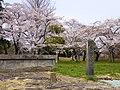 桜と多賀城 (Taga Castle with Cherry blossoms) 20 Apr, 2014 - panoramio.jpg