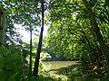 濁った池 - panoramio.jpg