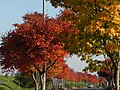 紅葉のカーブ - panoramio.jpg
