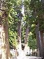 諏訪神社の大杉 - panoramio.jpg