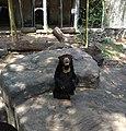 越南的馬來熊.jpg