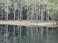 鏡のような湖(Lake Toyoni of the mirror) - panoramio.jpg