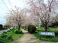 青柳北緑地 - panoramio.jpg