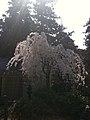香川県坂出市白峰寺 - panoramio (18).jpg