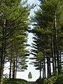 麓郷の空と樹・夏(Sky and trees) - panoramio.jpg