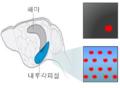 내후각피질세포의 전기생리학적 변화.png