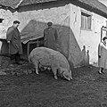 1958 visite d'une délégation INRA au Haras du Pin Cliché Jean Joseph Weber-71.jpg