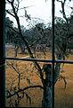 1981-12-Charleston Drayton Hall 004-ps.jpg
