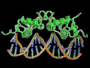 DNA-binding domain - Image: 1r 4o