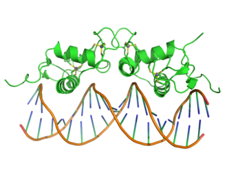 DNA-binding domain - Image: 1r 4o