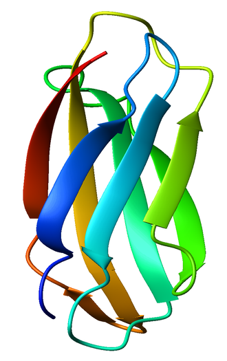 Tenascin - The fibronectin type III domain from human tenascin, colored from blue (N-terminus) to red (C-terminus).
