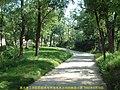 2002年 林荫小路 path - panoramio.jpg