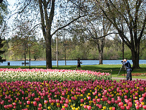 Dow's Lake - Tulip Festival at Dow's Lake 2006