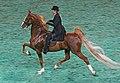 2009 Worlds Championship Horse Show (3877971589).jpg