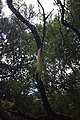 2012-10-27 13-06-58 Pentax JH (49283319143).jpg