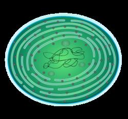 201208 Cyanobacteria.png