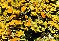 2013-01-31 15-28-28-lichens.jpg