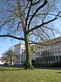 20130401Ostschule Saarbruecken1.jpg
