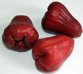 2014-04-26 Syzygium samarangense 03 anagoria.JPG