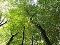20141026Habsterwiesen Saarbruecken06.jpg