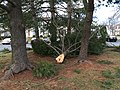 2016-02-25 07 36 42 White Pine branches broken by a severe thunderstorm on Higgs Court in the Franklin Farm section of Oak Hill, Fairfax County, Virginia.jpg