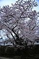 20160403 Himeji-Castle 3451 (26220670844).jpg