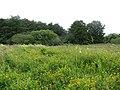 2018-07-11 View across Southrepps common, Norfolk (1).JPG
