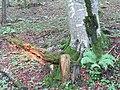 2018-08-11 (178) Nature at Tirolerkogel, Annaberg, Austria.jpg