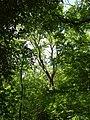 20180522130DR Dohna Naturschutzgebiet Spargrund.jpg