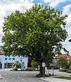 2019 Burgthanner Alteiche 01.jpg