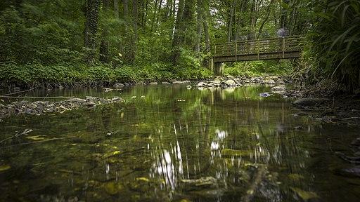 20200524-3 Stream Naturpark Hohes Venn-Eifel
