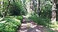20200728 133333 Białowieża Forest.jpg