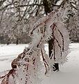 2021-01-16 14-41-01 gelée-blanche.jpg
