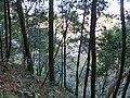 2 Chome Tsukimichō, Tajimi-shi, Gifu-ken 507-0043, Japan - panoramio (2).jpg