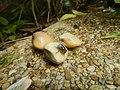 4087Ants Common houseflies foods delicacies of Bulacan 54.jpg