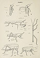 48-Indian-Insect-Life - Harold Maxwell-Lefroy - Orthoptera.jpg