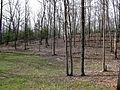 5 acre looking Northwest (4470663900).jpg