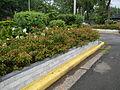 8095jfQuezon Memorial Circle City Monumentfvf 25.JPG