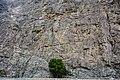 A-lone Tree.jpg