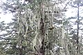 A6 2012-06-05 huanglong liuzusai - panoramio (11).jpg