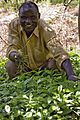 A man tends to his newly planted tree seedlings in a nursery in Arokwo Village, Kapchorwa,Uganda, on 11th March, 2009. (10662551583).jpg