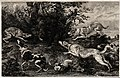 A pack of dogs has cornered a wild boar in the undergrowth a Wellcome V0021855.jpg