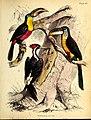 A popular history of birds (18958048164).jpg