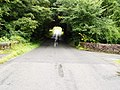 A tree tunnel - geograph.org.uk - 528944.jpg