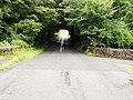 A tree tunnel - geograph.org.uk - 528944.jpg