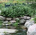 Aarrepuisto puro luonnonkivet.jpg