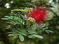 Aburi garden 5.jpg