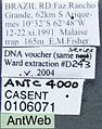 Acanthostichus kirbyi casent0106071 label 1.jpg