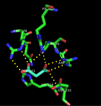 Lysophosphatidic acid phosphatase type 6 - Image: Active site with residues that interact with lysophosphatidic acid