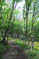 Aharmyshskyi Forest.JPG